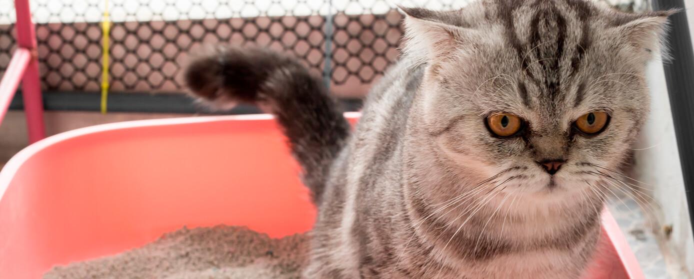 Entrena a tu gatito para usar un arenero con Skoon®