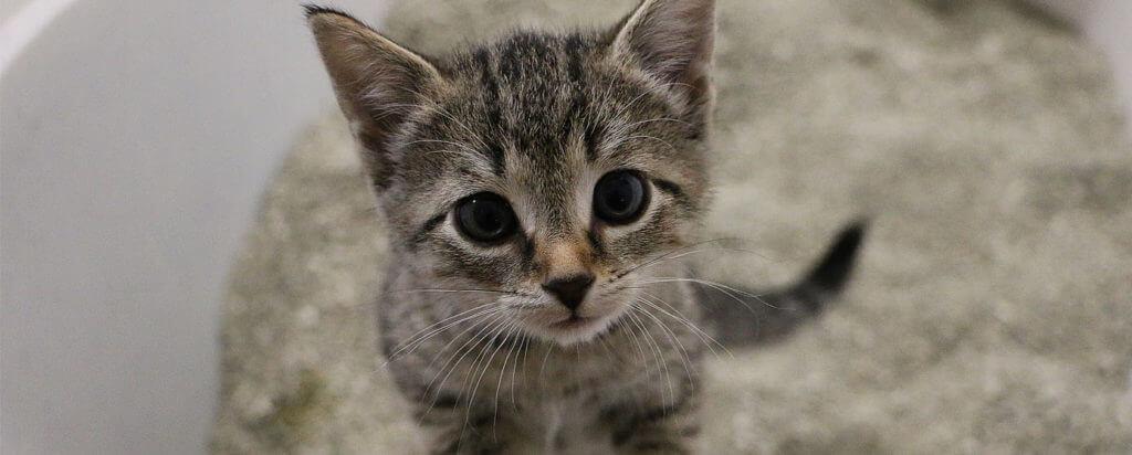 tipos de arenas para gato