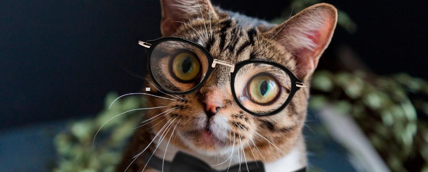 15 datos curiosos que no sabías de los gatos