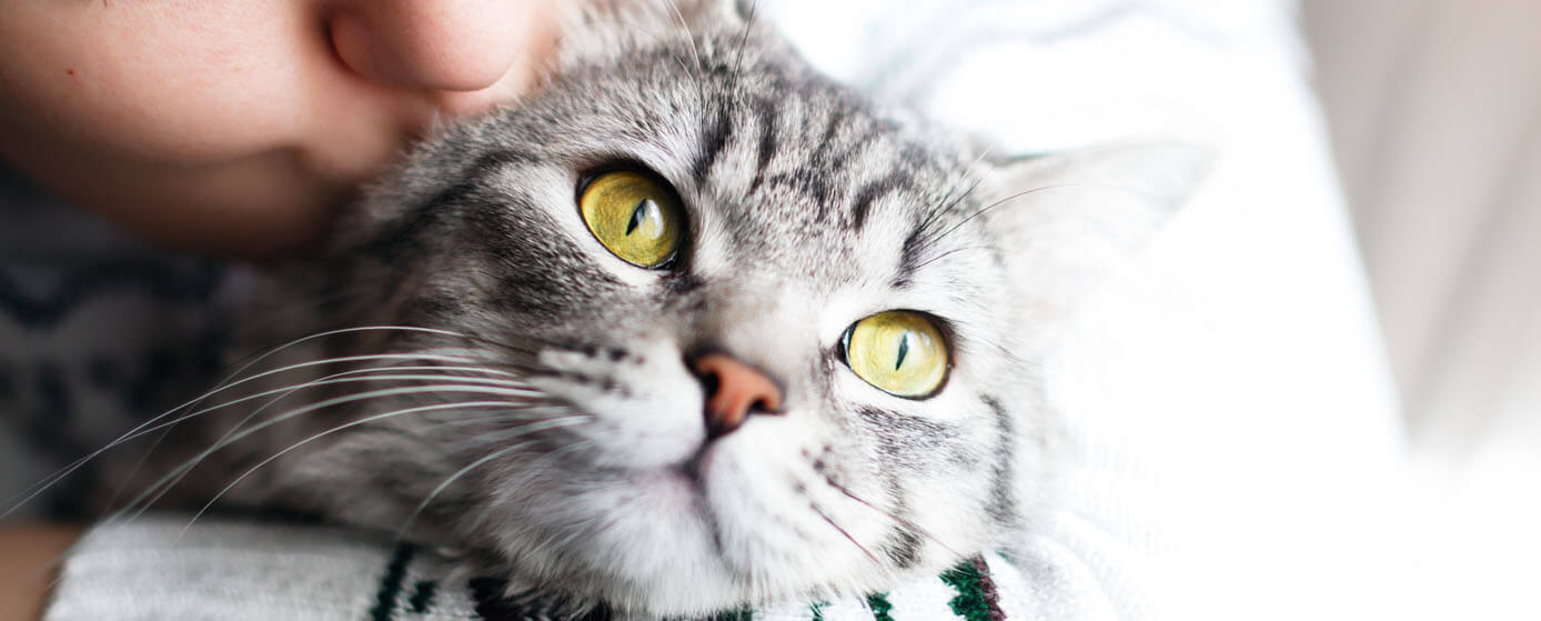 ¿Dónde comprar la arena para gatos de Skoon®?
