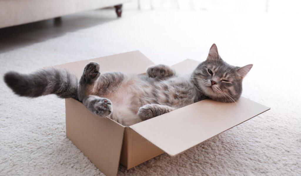 Gato acostado en caja