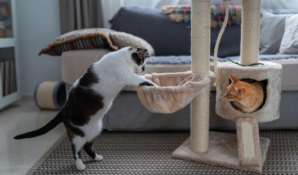 Gatos en rascador
