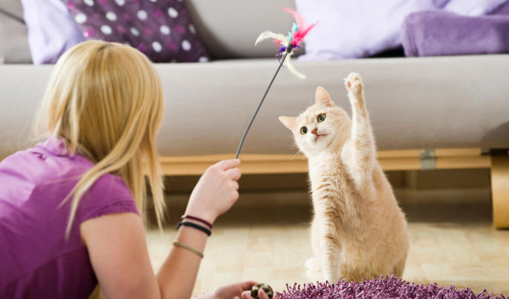 Juegos para gato - Vara con plumas