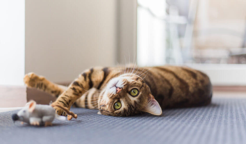 Juegos para gato - ratón electrónico