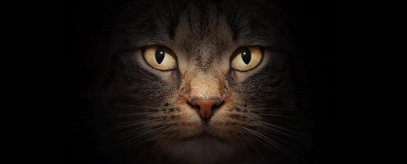 por qué los gatos son místicos