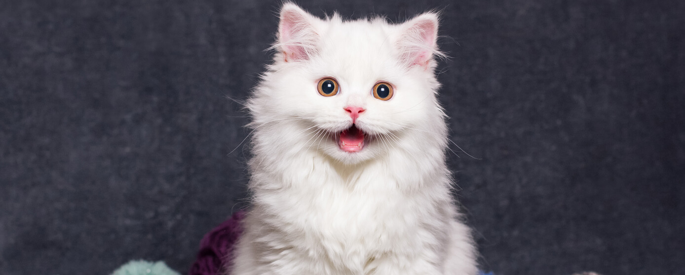 comportamientos únicos de los gatos