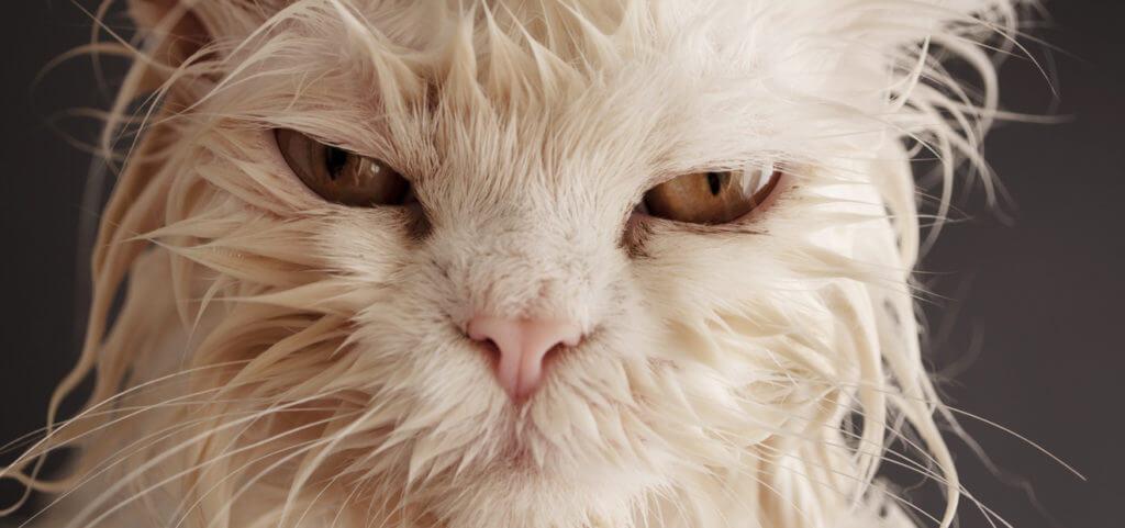 a los gatos no les gusta el agua