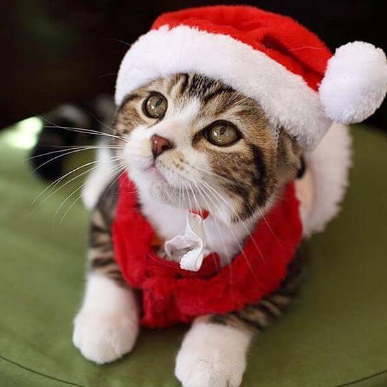 disfraces para gatos de santa