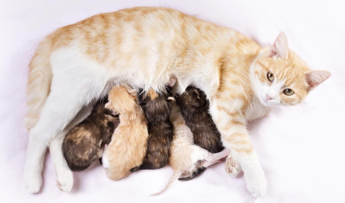 Gatos bebés alimentándose