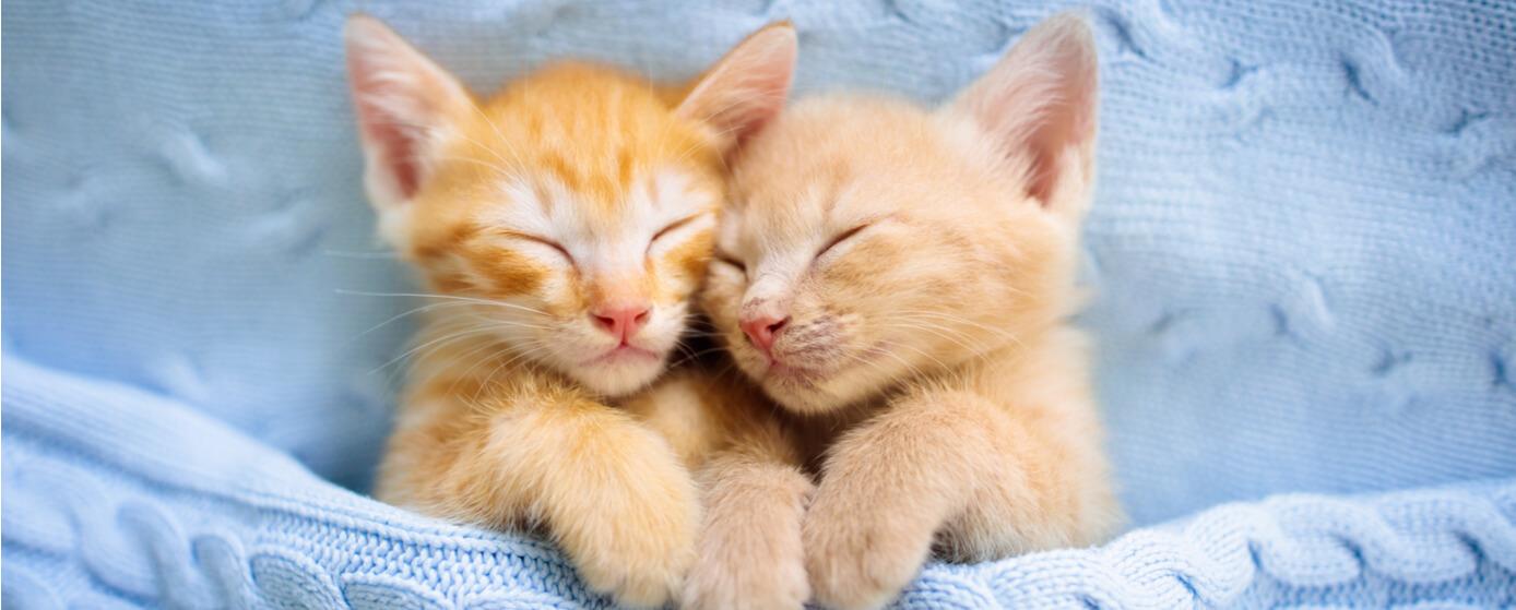 Gatos pequeños dormidos