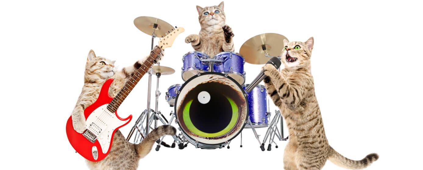 Canciones que hablan de gatos y su historia