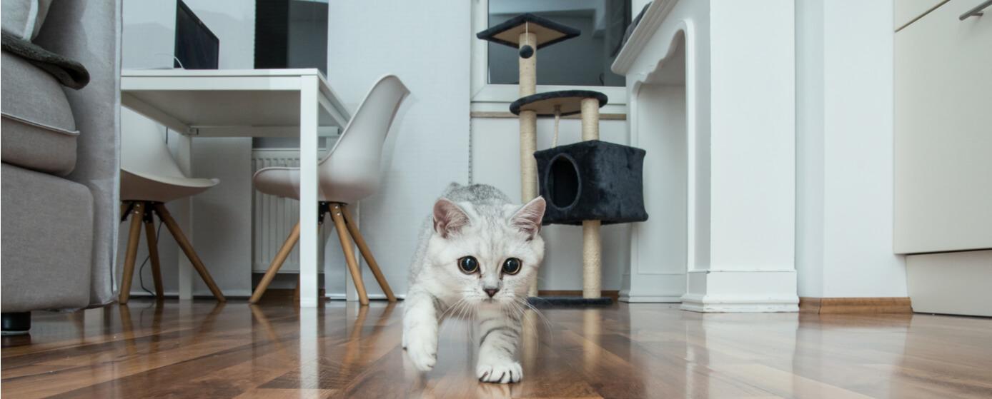 ¿Qué pasa con tu gato cuando se queda solo?