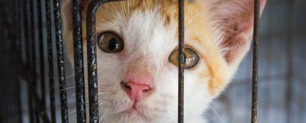 adoptar un gato en México