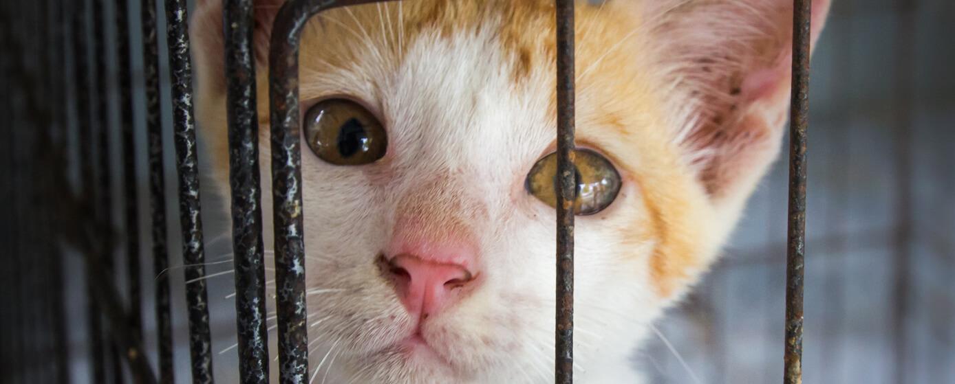 ¿Por qué adoptar un gato te hace la vida más feliz?