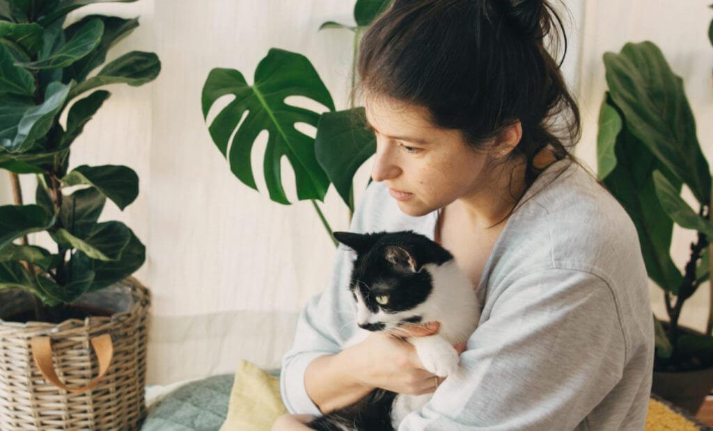 energía y emociones con los gatos