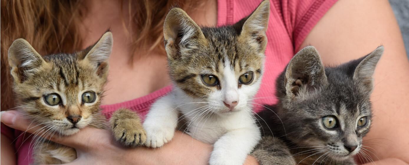 Centros de adopción de gatos en México