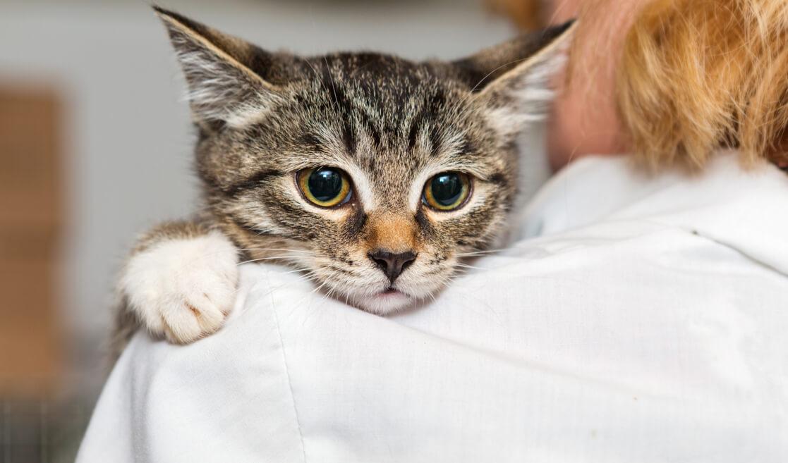 Gato con su nuevo dueño