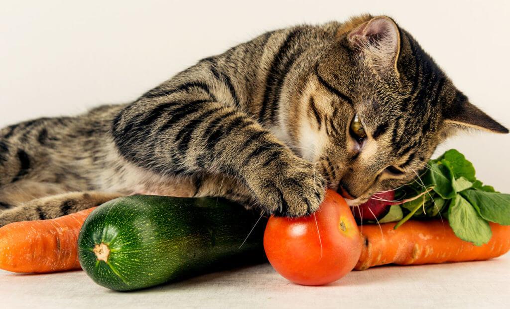 frutas y verduras que si pueden comer los gatos