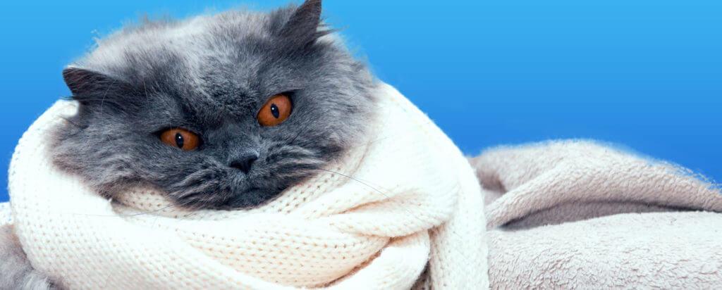 proteger a los gatos del frío