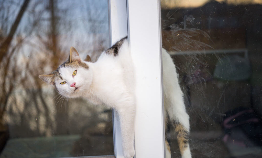 frío exterior pelaje de gatos