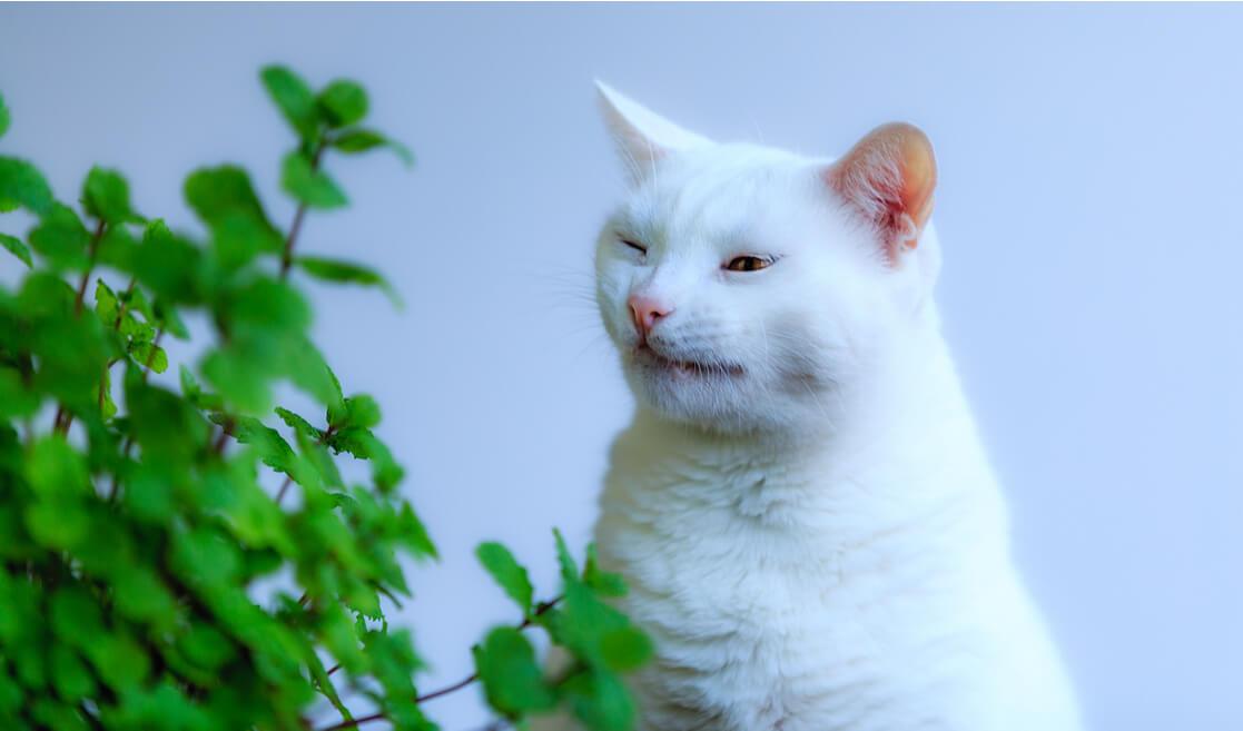 Gato con alergia