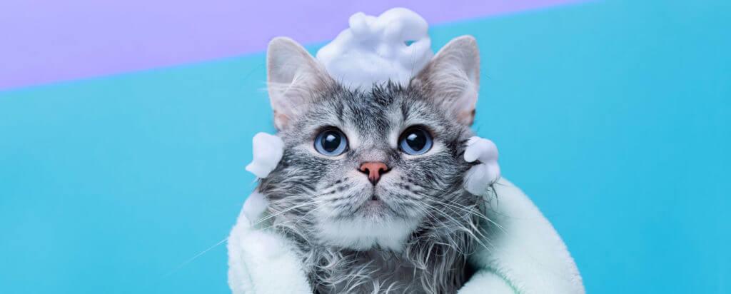 se puede bañar a un gato