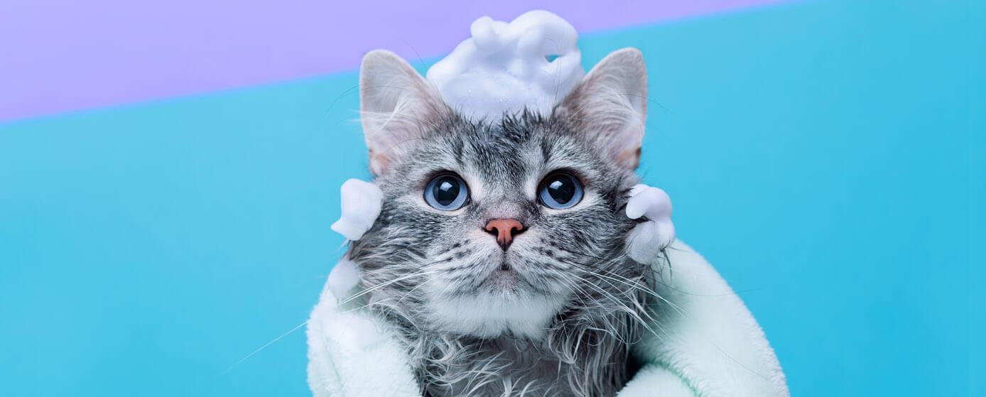 ¿Se puede bañar a un gato? Resuelve tus dudas