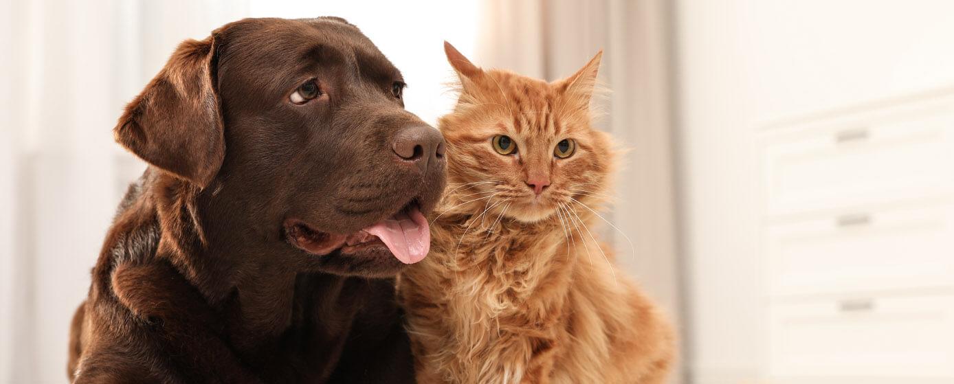 qué prefieren las personas perros o gatos