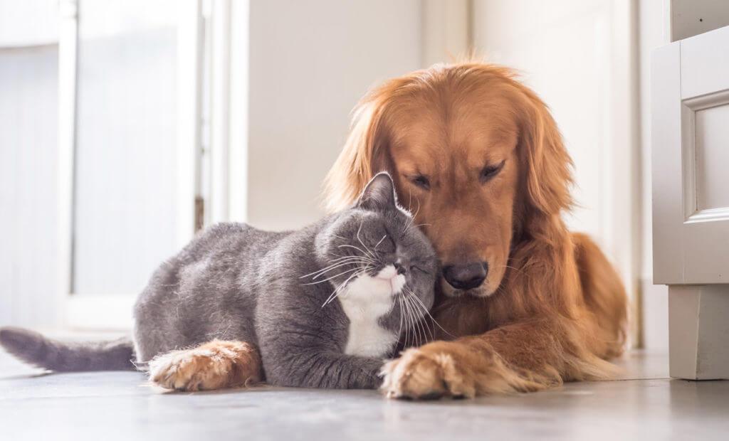 perros o gatos cuál es tu favorito