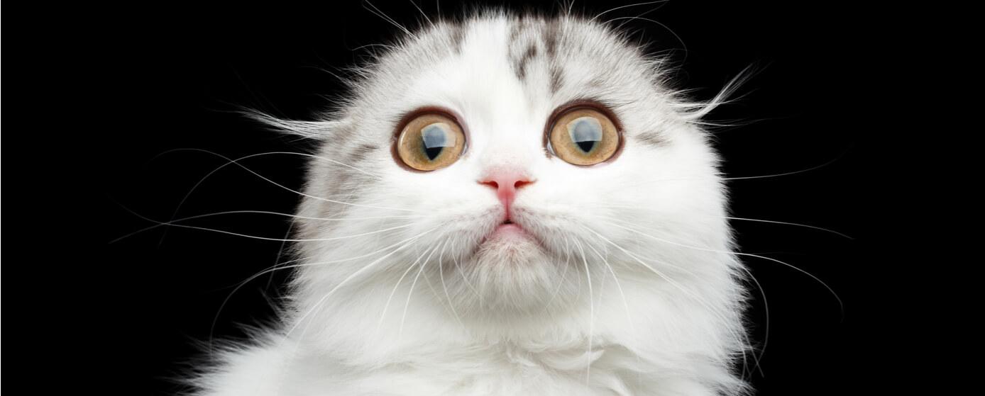 Los mejores memes de gatos de la web
