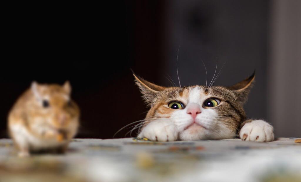 instinto de gato presa