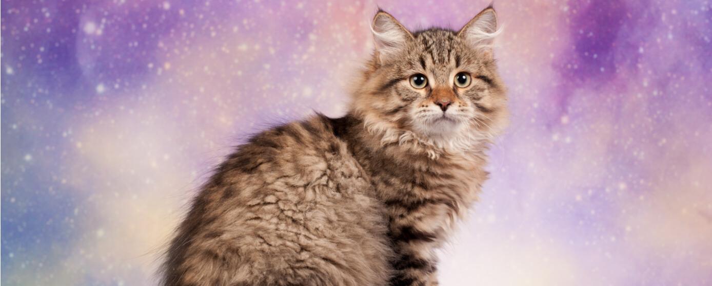 La sabiduría de los gatos y comunicación con sus dueños