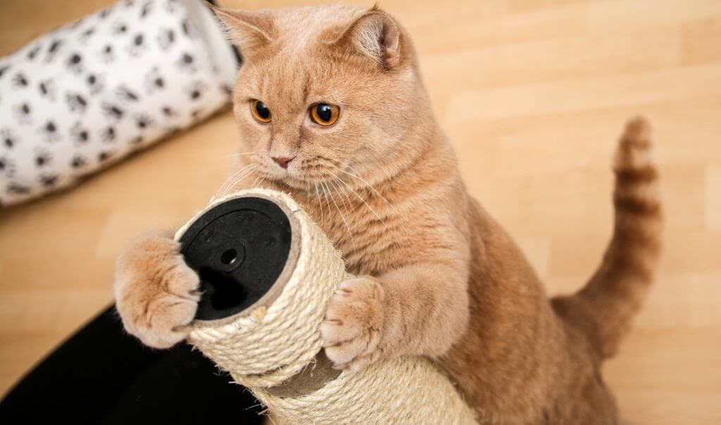 un gato es feliz cuando permanece activo