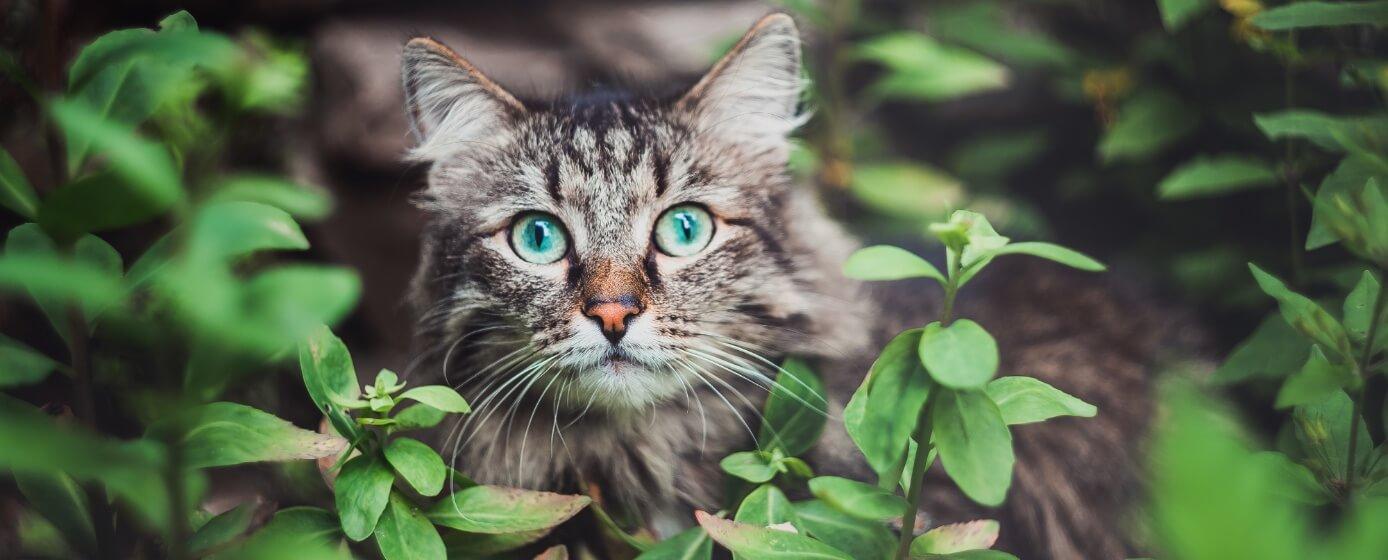 gatos son más independientes
