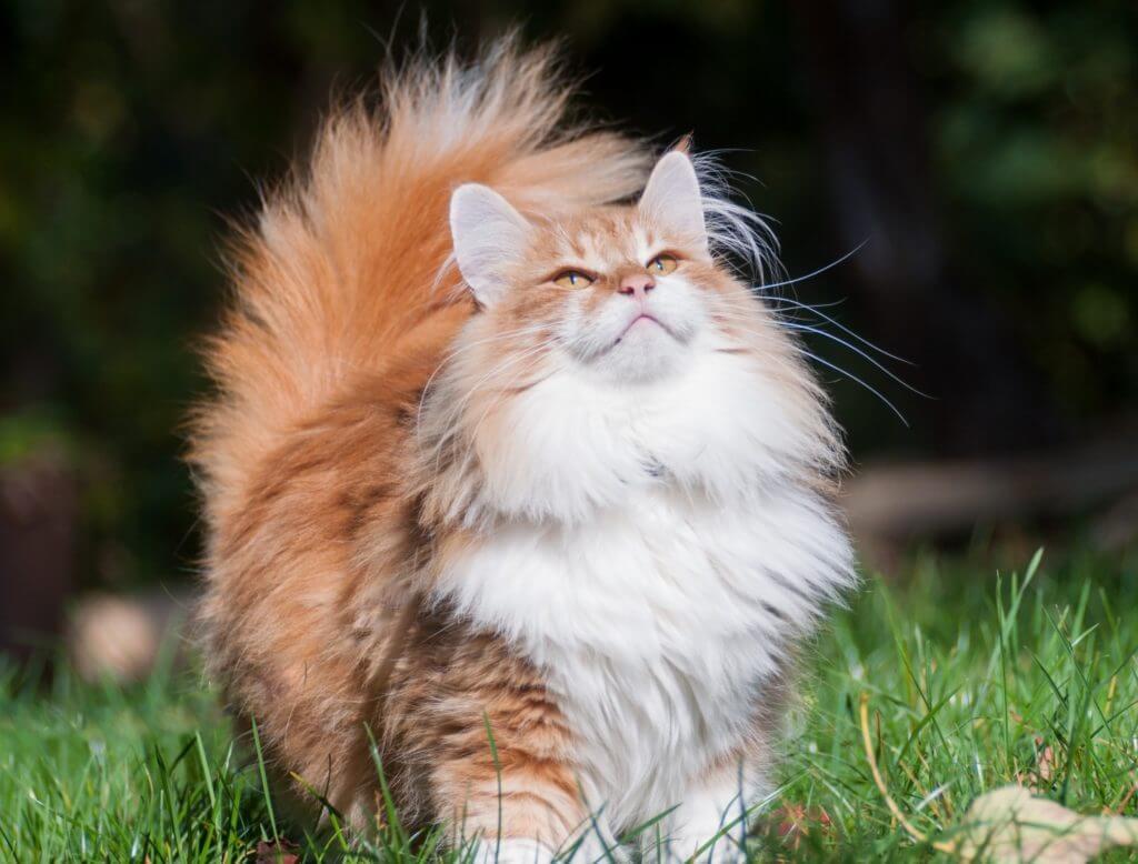 los gatos son cazadores naturales y más independientes