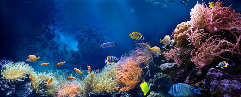 Océanos, arrecife y peces