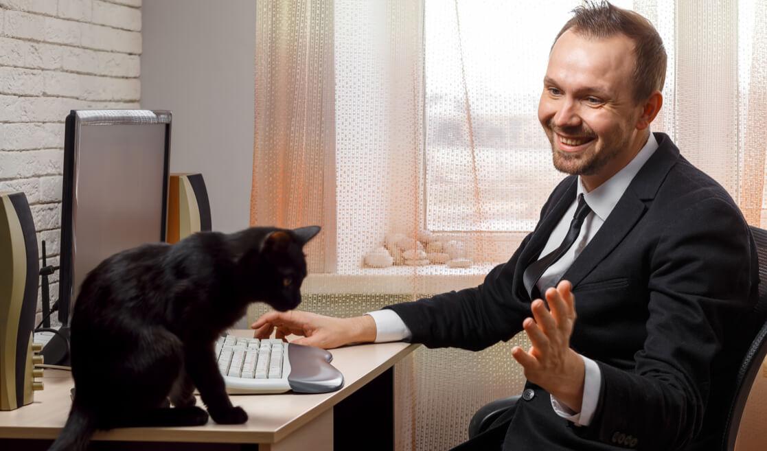 Gato en oficina