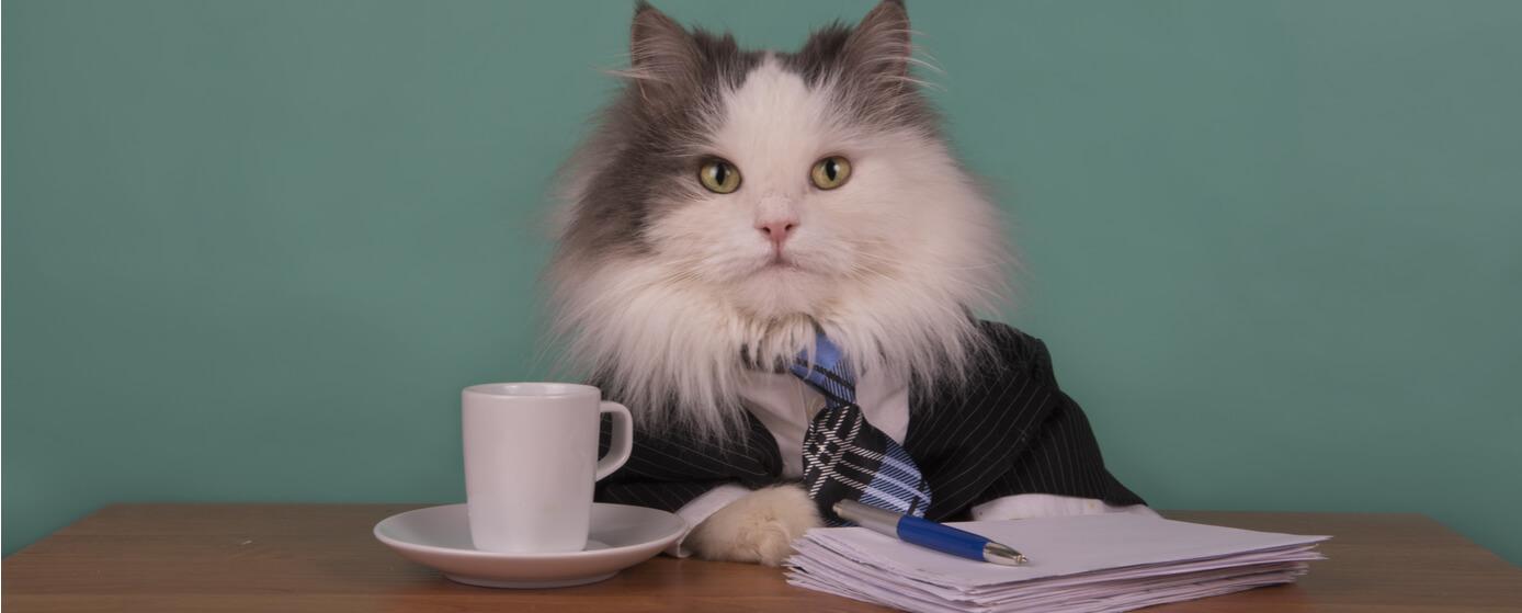Llevar tu mascota al trabajo