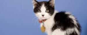 Gatito blanco con negro