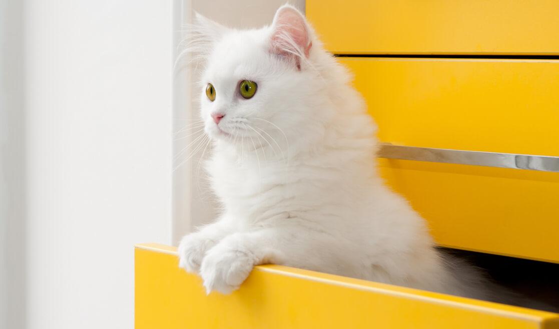 Gato en cajón
