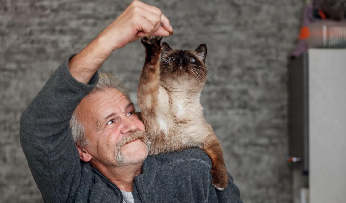 Gato feliz con su dueño