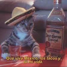 Gato meme mexicano