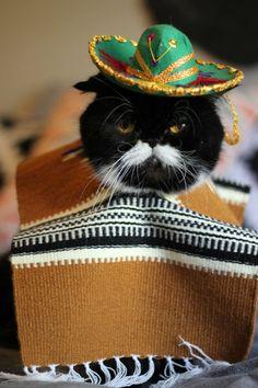 Gato con zarape