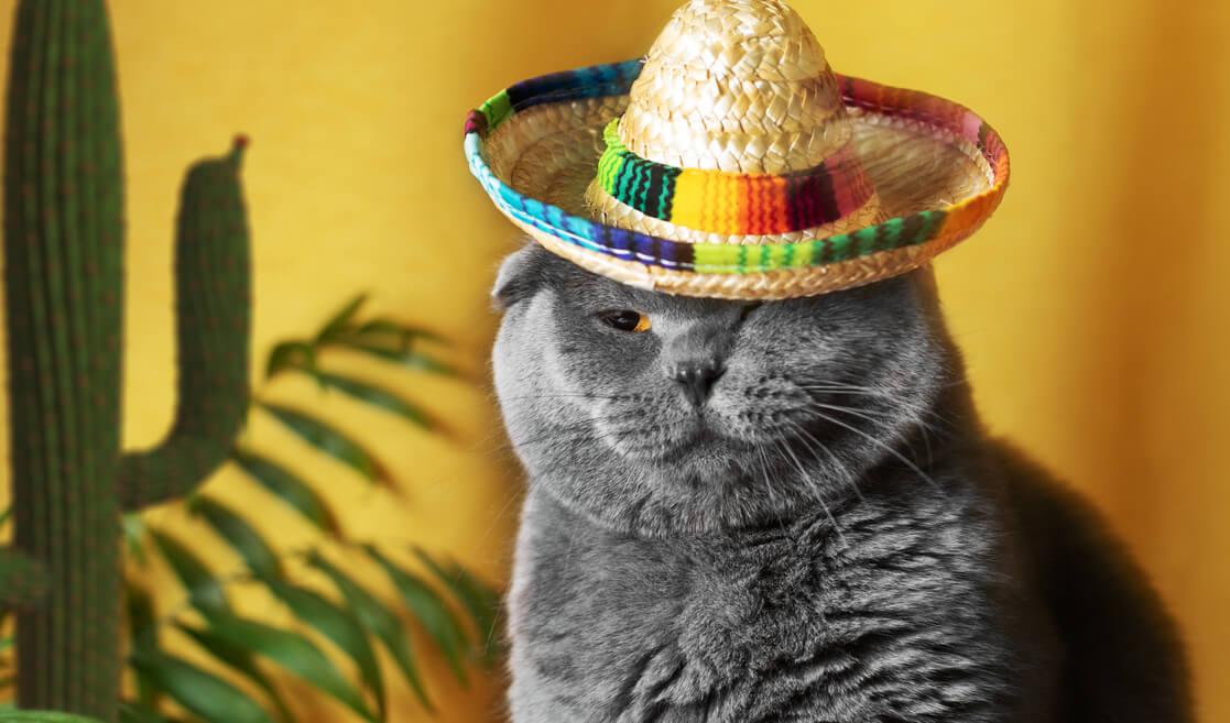 Gato con sombrero mexicano