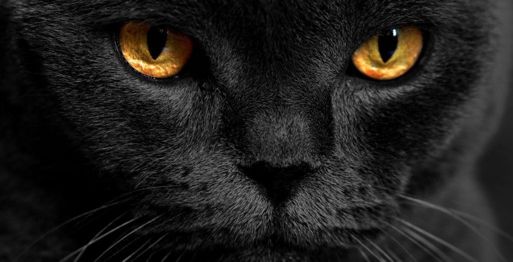 por qué los ojos de las gatos brillan