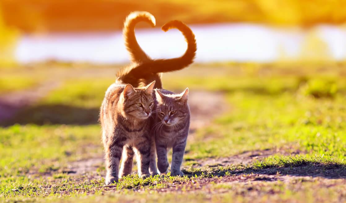 Gatos con colas entrelazadas