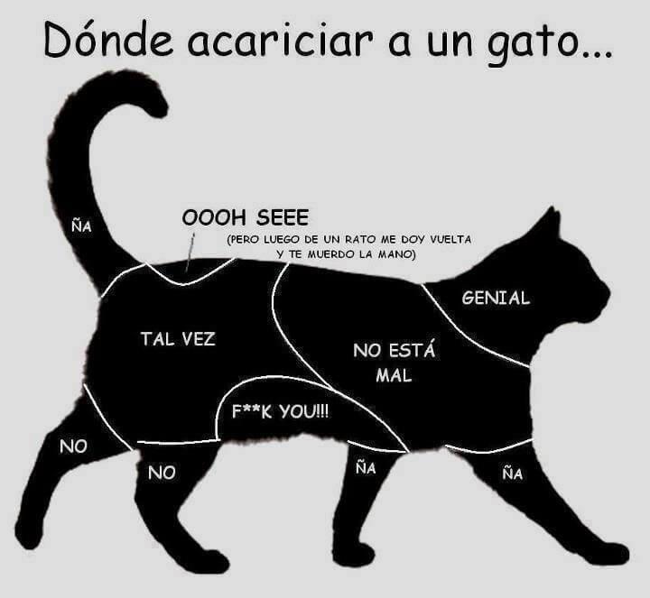 Caricias a los gatos